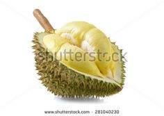 Find durian stock images in HD and millions of other royalty-free stock photos, illustrations and vectors in the Shutterstock collection. Thousands of new, high-quality pictures added every day. Constantino, Royalty Free Stock Photos, Fruit, Vectors, Pictures, Yellow, Photos, The Fruit