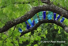 One branch serves as a bottle tree, with carriage screws supporting an assortment of blue bottles.Photo by: Pam Penick
