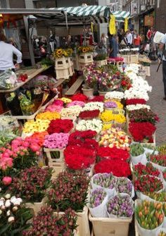 Amsterdam's Flowers Market on the Singel Canel. Flowers For Sale, May Flowers, Beautiful Flowers, Luxembourg, Amsterdam Flower Market, Holland Flowers, South Africa Honeymoon, Honeymoon Planning, Honeymoon Ideas