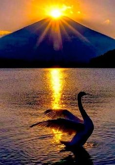 Beautiful Nature Pictures, Beautiful Nature Wallpaper, Beautiful Sunset, Amazing Nature, Nature Photos, Beautiful Birds, Beautiful World, Swan Pictures, Sunset Pictures