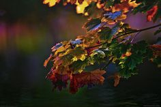 Photograph Autumn colors in the forest by Chris Pellaers on 500px