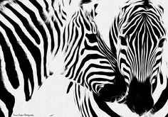 1000+ images about zebras on Pinterest | Zebra painting, Stippling ...