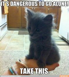 If you are looking for a truly unique and beautiful kitten you don't have to look much further than the Russian Blue breed. Delightful Discover The Russian Blue Cats Ideas. Funny Cute Cats, Cute Cat Gif, Cute Cats And Kittens, I Love Cats, Kittens Cutest, Cute Dogs, Funny Animal Memes, Cat Memes, Funny Animals