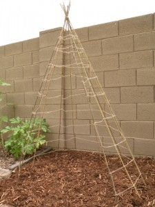 Build a Bean Teepee in Your Backyard. We have the netting here to wrap your poles with.