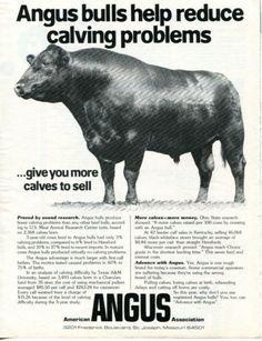 1982-American-Angus-Association-Bull-Print-Ad