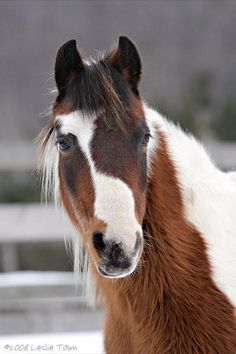 Beautiful Pinto Pony. Different animal, same coloring.