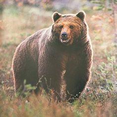 BeÄr han Sveriges meste björnfotograf?