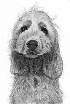 """""""Cheeky Spaniel"""" ~ By Gary Hodges Specializing exclusively in graphite pencil drawings."""