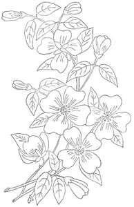 LOTS of Free hand embroidery patterns – Dogwood pattern