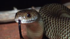 PIUS EMELIFONWU BLOG: One animal is more venomous than any other - BBC