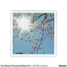 Sun Shining Through Budding Tree Clear Vanity Tray Square Serving Trays - original photograph printed on acrylic.