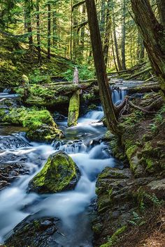 Waterfall Woods is a photograph by Janet Ballard. THE COLUMBIA RIVER GORGE IS AN INCREDIBLY GEORGOUS NATIONAL SCENIC AREA WHICH RUNS FROM THE MOUTH OF THE SANDY RIVER TO THE MOUTH OF THE DESCHUTES RIVER AND SPANS SOUTHERN WASHINGTON AND NORTHERN OREGON. THERE ARE NUMEROUS WATERFALLS IN THE AREA AS WELL AS HIKING TRAILS AND CLIMBS. THIS IMAGE WAS TAKEN NEAR THE BEAUTIFUL PANTHER CREEK FALLS. Source fineartamerica.com