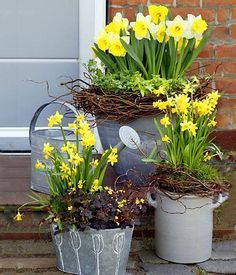 Daffodils - plant portrait, care and decoration tips- Narzissen – Pflanzenporträt, Pflege- und Dekotipps Plant and care for narcissus in a pot or in the garden and arrange it as vase flowers. Flower Vases, Flower Pots, Flower Arrangements, Flowers Garden, Potted Flowers, Container Flowers, Container Plants, Daffodils Planting, Decoration Entree