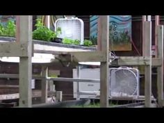Sweetwater Organics-Milwaukee's second aquaponic farming urban farming enterprise of note.