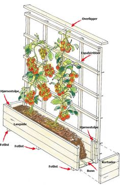 Bygg en blomsterkasse med espaljé