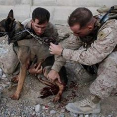 Mark Behl, left, and another Marine, perform first aid on U. Military working dog Drak after he was wounded in a bomb attack in Afghanistan. Military Working Dogs, Military Dogs, Police Dogs, Military Service, Military Honors, Military Army, War Dogs, Navy Seals, Service Dogs