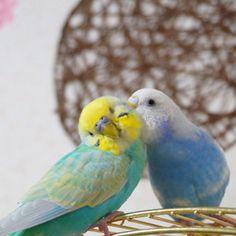 鳥フォトコンテスト「ぴっぴ・ぴーこ」さん                                                                                                                                                                                 もっと見る