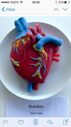 Heart 3d model School Projects School projects, School