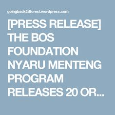 [PRESS RELEASE] THE BOS FOUNDATION NYARU MENTENG PROGRAM RELEASES 20 ORANGUTANS | Going Back to the Forest