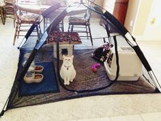 """My mom posted this on Facebook today. """"Kitty prison while we get the house painted."""" - Imgur"""