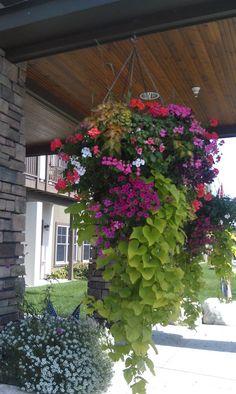 What A Great Hanging Plant Gardening Plantas Container Flowers, Container Plants, Container Gardening, Outdoor Plants, Outdoor Gardens, Plants Indoor, Plant Design, Garden Design, Hanging Flower Baskets