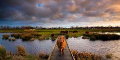 Right of way - De Alde Feanen National Park, The Netherlands by Bas Meelker on 500px
