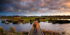 Right of way - De Alde Feanen National Park, The Netherlands by Bas Meelker on 500px