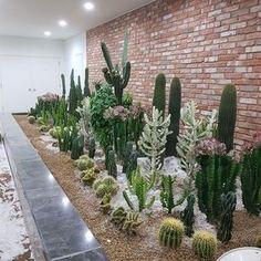 : @misofarm_cactus #cactusgarden #succulentgarden #garden #باغ #باغ #کاکتوس_باغ #ساکولنت_باغ #باغ_کاکتوس #باغ_ساکولنت #succulents #succulent #succulove #suculentas # #cactus #cacti #kaktus #多肉植物 #サボテン #선인장 #nature #plants #plant #گیاه #گل #ساکولنت #ساکیولنت #کاکتوس #succulentaddict #succulentlover . please see my other pages: . @amin_hajimohamadi_ @amin__hajimohamadi