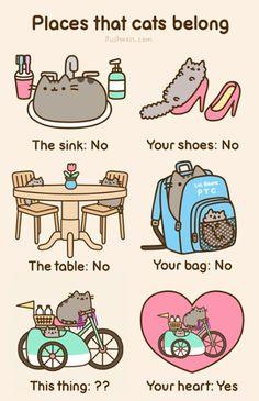 Places cats belong
