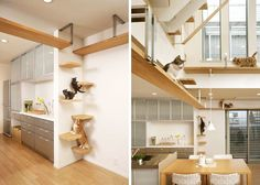 Ad shelves to your walls and create stairs that your cat can climb and have fun.