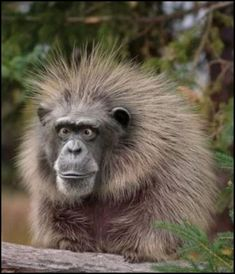 funny animal pictures | Funny Monkey Face | Funny Animal Pictures