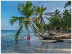 #beach #paradise #pink #tire #rope #palm #tree