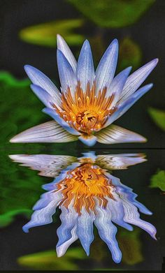 flowersgardenlove:  Reflected Glory Beautiful gorgeous pretty flowers
