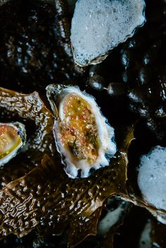Oysters with finger lime. by luisa brimble, via Flickr
