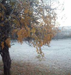 Pretty Wisteria in Winter
