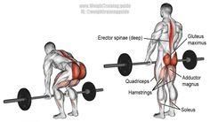 Barbell deadlift exercise illustration