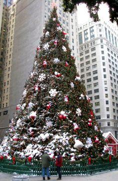 Christmas Tree in Daley Plaza, Chicago, Illinois, U.S