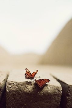 Black White Photos, Black And White Photography, Fotografie Portraits, Foto Blog, Butterfly Kisses, Monarch Butterfly, Photoshop, Tumblr Wallpaper, Beautiful Butterflies