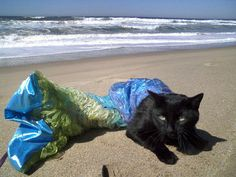 This mermaid kitty wishes death on his owners