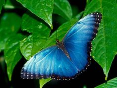 Justo cuando pensó que su vida se terminaba, se convirtió en mariposa.