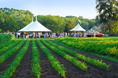 "For the true spirit of ""fresh and local,"" reserve yourself a place at one of Connecticut's farm-to-table dinners. You'll experience the bounty of our farms and fields and the talent of some of our finest chefs."