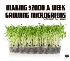 Hydroponic gardening 279926933074793619 - Permaculture Voices Luke Callahan Source by SocialBotterfly Aquaponics System, Hydroponic Farming, Aquaponics Greenhouse, Hydroponic Growing, Aquaponics Fish, Diy Hydroponics, Greenhouse Ideas, Growing Microgreens, Growing Tomatoes