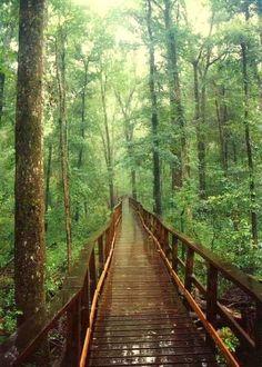 Congaree National Park, South Carolina >>> Another place to add to my US 'must explore' list!   Repinned by /gustavocondecab/