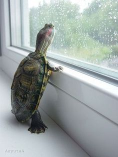 Awwww! Turtle looking out the window!