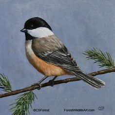 Black-capped chickadee bird painting by Crista S. Forest