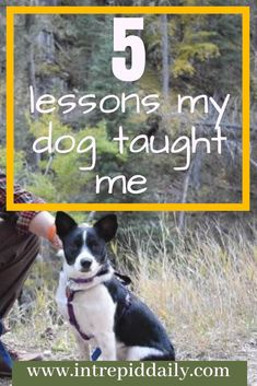 You can learn a whole from dogs. I know mine has taught me bunches about life. She's a good dog, and she's helped me grow, become more patient, and more understanding. Want to know what else my dog has taught me? Check out these five life lessons from my Mans Best Friend, Best Friends, Hiking Europe, Life Rules, Old Dogs, Dog Training Tips, New Tricks, Self Improvement, I Love Dogs