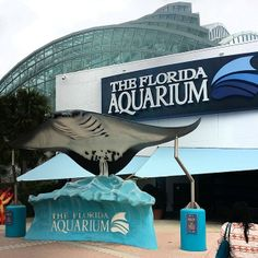 Go learn about the fish you just ate at The Florida Aquarium - make sure you check out the sharks and penguins while you're there!