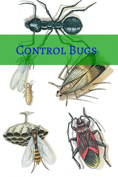 Control Bugs: Our collection of tips may help you find a bug-busting solution Read more: http://www.familyhandyman.com/pest-control/control-bugs/view-all