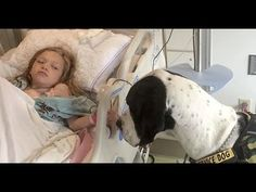 Giant Dog Approaches Little Girl In Hospital Bed, Now Keep Your Eye On His Back - YouTube