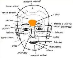 diagnostika - Játra a žlučník